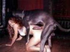 Sex dog girl animal